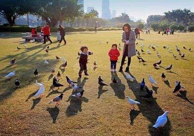 白鹭洲鸽子广场