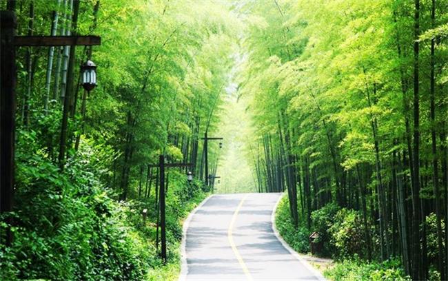 森林氧吧漫步